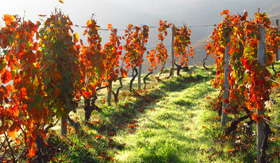 Douro Valley Vineyard