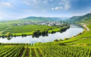 View River Cruises